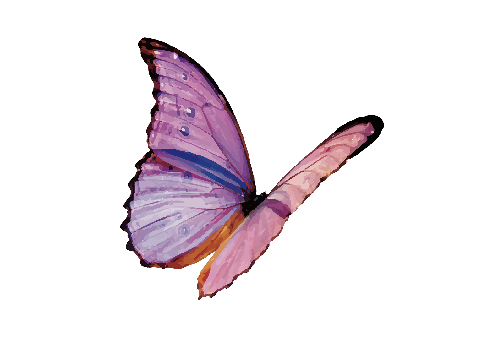 image of a purple butterfly