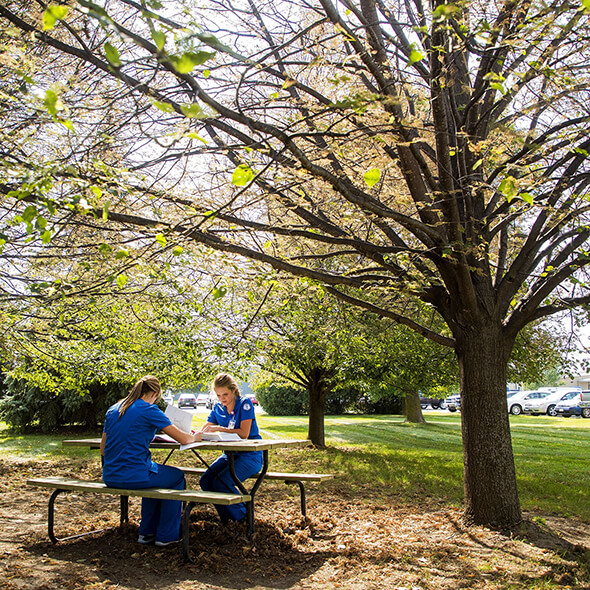 Two MA students studying at a picnic table under a tree