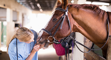 A veterinary technician looking at a horse